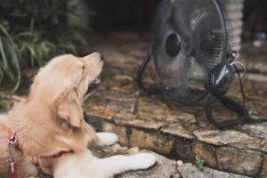 4 tips om uw woning fris en koel te houden
